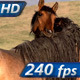 Horses Tenderness - VideoHive Item for Sale