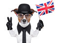british dog  banner - PhotoDune Item for Sale