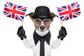 british dog - PhotoDune Item for Sale