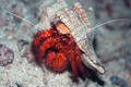 Crab in shell - PhotoDune Item for Sale