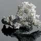 white coral - PhotoDune Item for Sale
