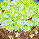 chocolate birthday cake - PhotoDune Item for Sale