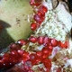Pomegranate macro with Seeds - PhotoDune Item for Sale