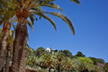 Green palm tree in Park Guell, Barcelona, Spain - PhotoDune Item for Sale