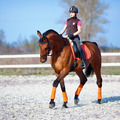 Horse riding - PhotoDune Item for Sale