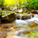 Forest Stream - VideoHive Item for Sale