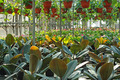Greenhouse Indoor - PhotoDune Item for Sale