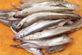 Fresh smelts fish - PhotoDune Item for Sale