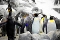 Emperor penguins - PhotoDune Item for Sale