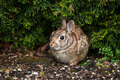 Wild Rabbit in Spring time - PhotoDune Item for Sale