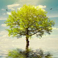 Tree in Water on Sky - PhotoDune Item for Sale