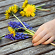 Child with Dandelions Blue Bell Flowers - PhotoDune Item for Sale