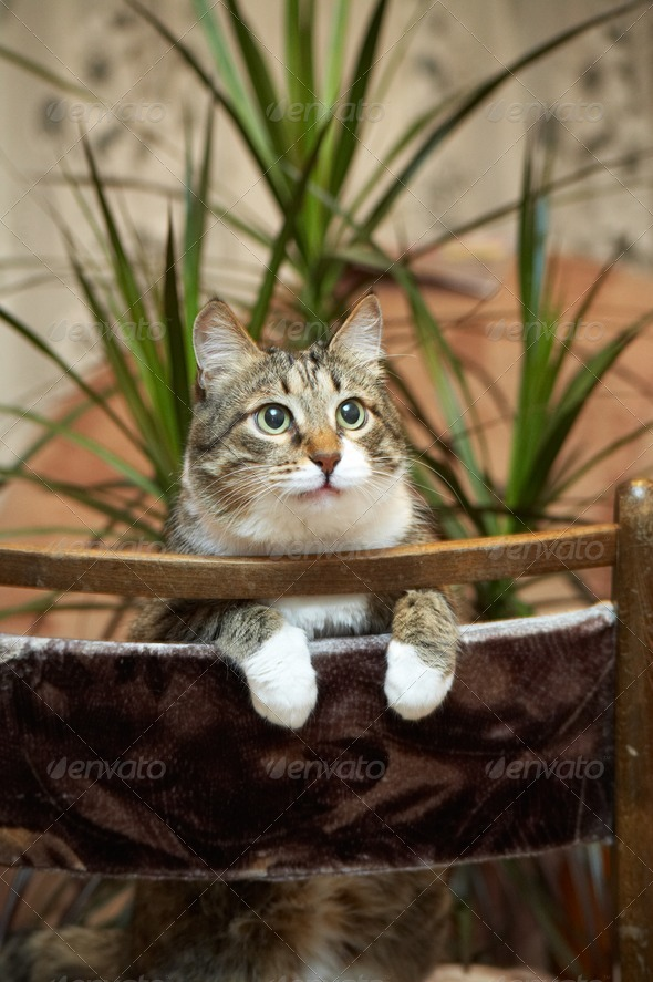 Cat posing for camera. - Stock Photo - Images