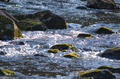 Small river with stones - PhotoDune Item for Sale