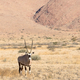 Oryx in Namibia, Africa - PhotoDune Item for Sale