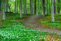 Park with wood anemone flowers - PhotoDune Item for Sale