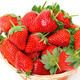 Ripe Red Strawberries in basket - PhotoDune Item for Sale