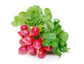 Small garden radish with leaf - PhotoDune Item for Sale