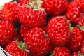 Ripe Red strawberries - PhotoDune Item for Sale