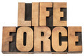 life force in wood type - PhotoDune Item for Sale