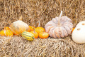 Pumpkins with different colours in the field - PhotoDune Item for Sale