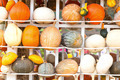 Colours Pumpkins - PhotoDune Item for Sale