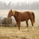 Horse - PhotoDune Item for Sale