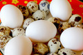 Red dish with hen and quail eggs - PhotoDune Item for Sale