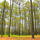 Coniferous forest - PhotoDune Item for Sale