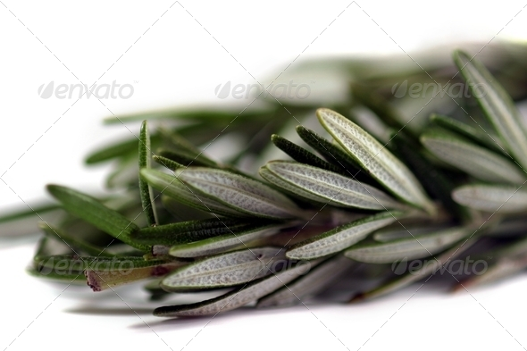 Rosemary - Stock Photo - Images