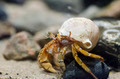 Hermit crab under water - PhotoDune Item for Sale