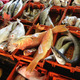 fish at fishmarket - PhotoDune Item for Sale