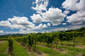 Clouds over vineyard  - PhotoDune Item for Sale