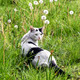 Young kitten in grass outdoor shot at sunny day - PhotoDune Item for Sale