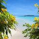 Flowers on sandy beach with tropical island in background - PhotoDune Item for Sale
