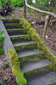 Moss covered stairs in forest - PhotoDune Item for Sale