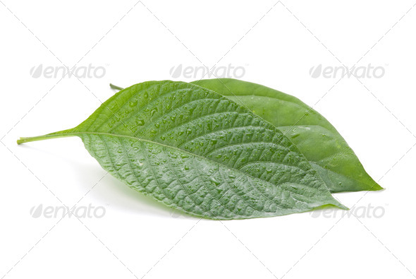 New and older concept, isolated green leaves - Stock Photo - Images