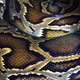 Boa snake skin texture and pattern - PhotoDune Item for Sale