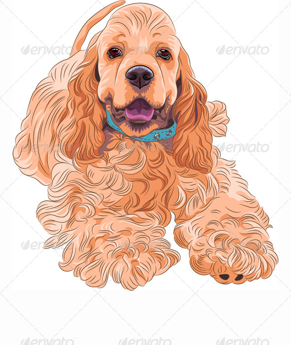American Cocker Spaniel - Animals Characters