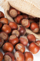 Hazelnuts - PhotoDune Item for Sale