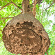 Wasp nest - PhotoDune Item for Sale
