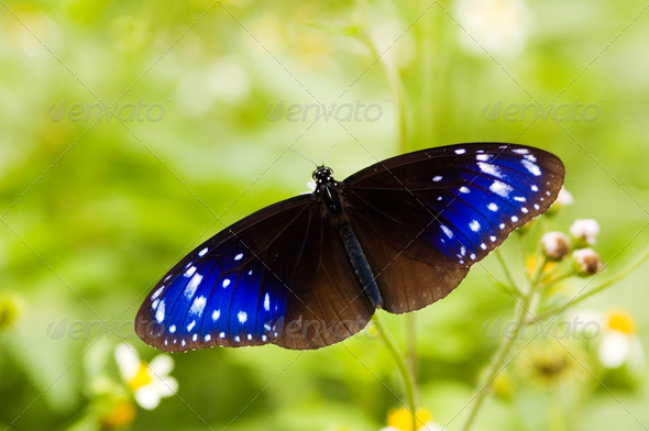 Blue stars on butterfly wings - Stock Photo - Images