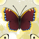 Butterfly Seamless - GraphicRiver Item for Sale