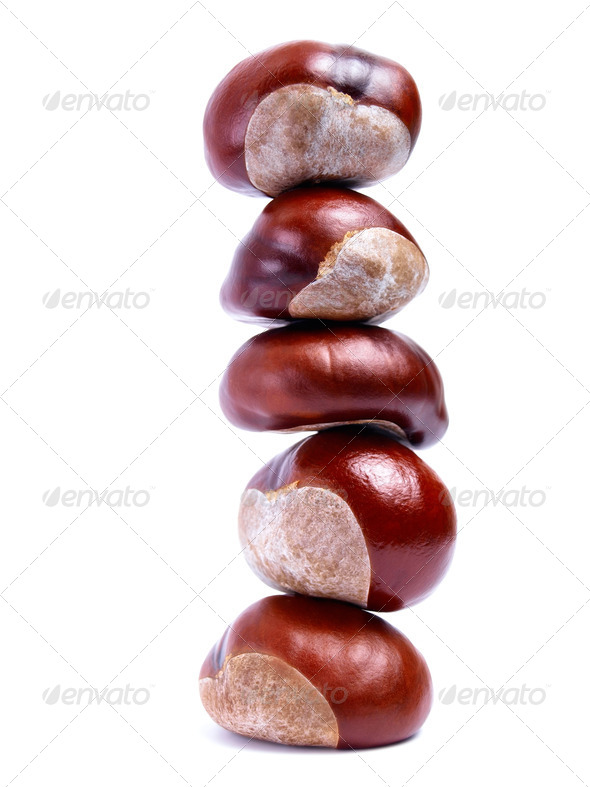 Chestnut tower - Stock Photo - Images