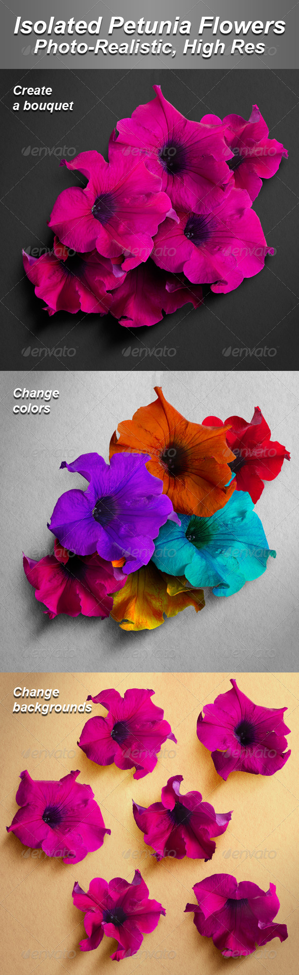 GraphicRiver 6 Isolated Photo-Realistic Petunia Flowers 4771995