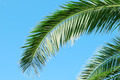 palm branch on background of blue sky - PhotoDune Item for Sale