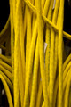 Yellow Network Cables - PhotoDune Item for Sale