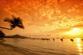 Sunset with palm and boats on tropical beach - PhotoDune Item for Sale