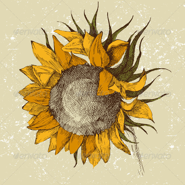 GraphicRiver Hand Drawn Sunflower 4780767