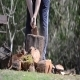 Man Splitting Logs 2 - VideoHive Item for Sale